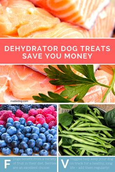 Learn easy tips & tricks for making dog homemade dog treats that save you money!