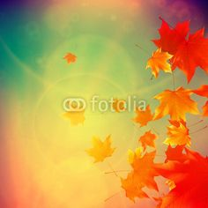 Vecteur : Beautiful autumn Leaves.