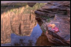 Zion reflections in one of the Emerald Pools