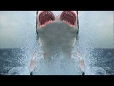 TWO HEADED SHARK!! - YouTube