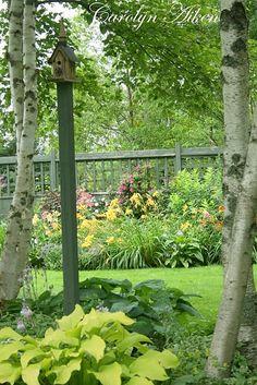 Hosta and daylilies