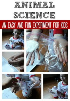 Animal Science Experiment for Kids