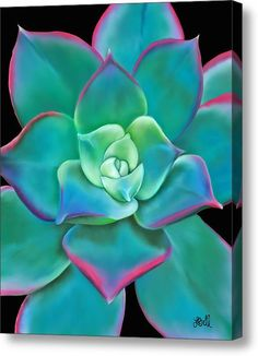 Succulent Aeonium Kiwi Acrylic Print by Laura Bell. All acrylic prints are professionally printed, packaged, and shipped within 3 - 4 business days and delivered ready-to-hang on your wall. Plant Painting, Plant Art, Oil Pastel Drawings, Art Drawings, Aeonium Kiwi, Echeveria, Pastel Art, Planting Succulents, Succulents Painting