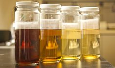 Turning animal byproducts into biodiesel