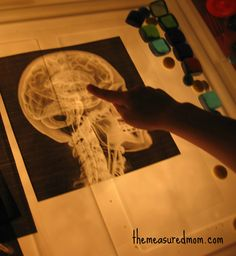 X-Ray Light Box Kids Activity. This would be a great way to learn about the human body!