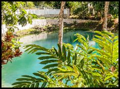 Water At Blue Hole Image Gallery - Blue Hole Gardens Jamaica Blue Hole, Jamaica, Plant Leaves, River, Gallery, Amazing, Places, Gardens, Outdoor