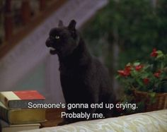 """""""Someone's gonna end up crying.""""- Salem (Sabrina The Teenage Witch) Salem Sabrina, Sabrina Cat, Salem Cat, Salem Saberhagen, Funny Memes, Hilarious, Funny Quotes, Film Quotes, Best Movie Quotes"""
