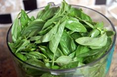 Basic pesto recipe + tips for freezing.  Must try the goat cheese pesto thing mentioned here!