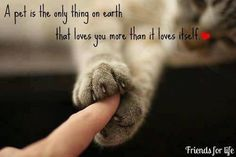 A pet is the only thing on earth that loves you more than it loves itself.
