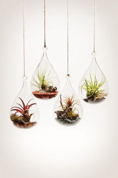 "A fleet of ""wren's nest"" hanging aeriums. http://shop.pistilsnursery.com/products/hanging-aerium"