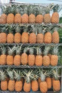 Pineapple Hawaii Oahu, Pineapple, Hawaii, Fruit, Pinecone, Pine Apple, The Fruit