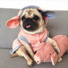 6cef7b817 Новости Dog Costumes, Dog Lovers, Pug Outfits, Dogs In Clothes, Cute Funny