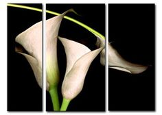 'Lily Swirl' 3 Piece Canvas Painting