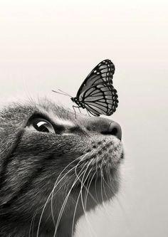 Chat avec papillon sur le nez