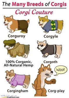 The many breeds of corgis.