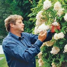 Hydrangea vitals you need to know for maximum blooms. | Photo: Webb Chappell | thisoldhouse.com