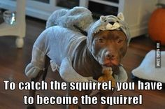 If you want to catch the squirrel...