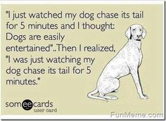 If you have a dog, I am sure you've thought this too!