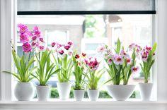Como Cuidar de Suas Plantas de Interior | Ideias Designer de Interior