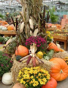 1000+ images about Corn Stalks on Pinterest | Fall Displays, Fall ...