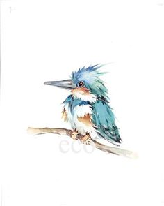 Watercolor Kingfisher by EcoProduct Watercolor Bird, Watercolor Paintings, Painting Art, Cute Illustration, Watercolor Illustration, Starry Night Art, I Like Birds, Kingfisher, Types Of Art