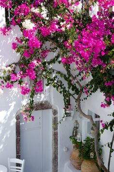 bougainvillea over whitewashed door in Bodrum, Turkey Bougainvillea, Dream Garden, Home And Garden, Beautiful Flowers, Beautiful Places, Plantation, Pink Flowers, Exotic Flowers, Yellow Roses
