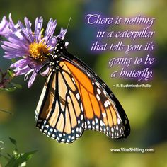 """""""There is nothing in a caterpillar that tells you it's going to be a butterfly.' ~R. Buckminster Fuller http://www.VibeShifting.com #inspiration #quotes"""