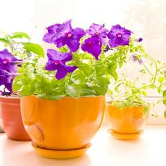 Overwintering Potted Plants: Learn how to keep your favorite potted plants with these answers to the most-asked questions about overwintering. birdsandblooms.com
