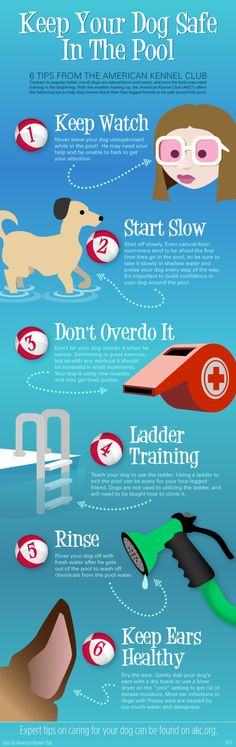 How to keep your dog safe in the pool #infographic