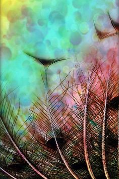 Pastels And Peacock Feathers Prints Etc @Fineartamerica