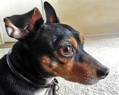 Milo's big brown eyes
