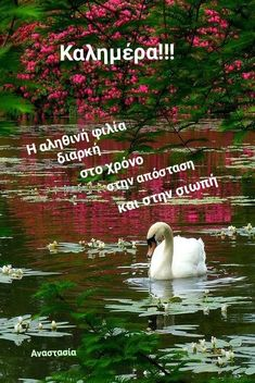 Greek Quotes, Good Morning, Beautiful Flowers, Wish, Movie Posters, Gifts, Ideas, Buen Dia, Presents