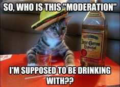 """just funny.made me laugh and I love salsa, guacamole AND tequila.had my first Margarita in TJ, Mexico and it became """"my drink""""! Tequila, Funny Cats, Funny Animals, Funny Jokes, Animal Funnies, Adorable Animals, Funniest Animals, Stupid Jokes, That's Hilarious"""