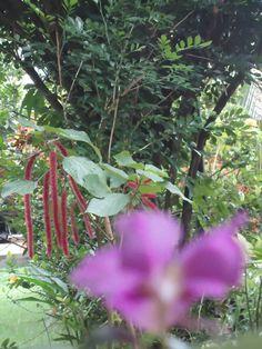 Minha bela flor desfocada, aos fundos o belo rabo-de-gato.