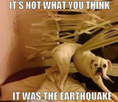 Dog stuck in shades, it's not what you think, there was an earthquake.