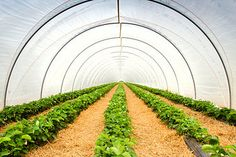 Greenhouse Vegetables, Stock Foto, Vineyard, Outdoor, Photos, Plants, Summer Recipes, Outdoors, Vineyard Vines