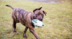 Tips til lettere aktivering af hunden - Agria Dyreforsikring Keds, Sports, Doggies, Hs Sports, Sport