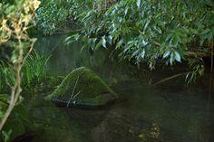 泉の森の水源池から流れ出る小川です。木陰のうっそうとした茂みの中をのぞくと、その流れに苔生した石が鎮座している姿が見えました。 緑の映る清流 Photography Portfolio, Ghibli, Aquarium, Seasons, Anime, Goldfish Bowl, Aquarium Fish Tank, Seasons Of The Year, Cartoon Movies