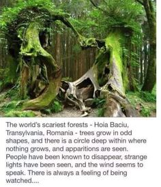 Discover the scary forest of Hoia Baicu! Most Haunted, Haunted Places, Beautiful Places To Travel, Cool Places To Visit, Photo Trop Belle, Haunted Forest, Haunted Houses, Voyage Europe, Wtf Fun Facts