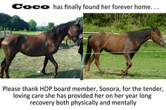 What food and care will do for a rescued horse