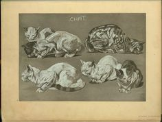 Chat. From New York Public Library Digital Collections.