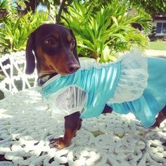 Cocoa likes to pose in dresses.