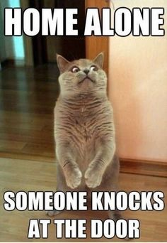 Home Alone. Someone Knocks At The Door funny lol humor funny pictures funny pics funny images funny animal pictures funny animal memes really funny pictures funny pictures and images funny animal captions funny animal pics with captions Funny Shit, Funny Animal Memes, Cute Funny Animals, Funny Dogs, Funny Stuff, Funniest Animals, Cat Memes Hilarious, Animal Captions, Cat Stuff