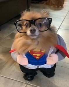 Home - Pets or Animals Funny Animal Videos, Cute Funny Animals, Cute Baby Animals, Funny Dogs, Animals And Pets, Animal Pictures, Cute Pictures, Cute Dogs And Puppies, Cat Breeds