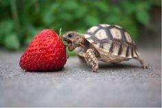 bon appétit little guy!