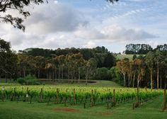 Polperro Winery Wedding- Mornington Peninsula Red Hill . Photography courtesy Tori and Sal