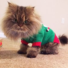 Pin for Later: We Can't Get Enough of These Cute Christmas Cats and Dogs