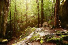 Карпатський ліс  #МандруючиУкраїною