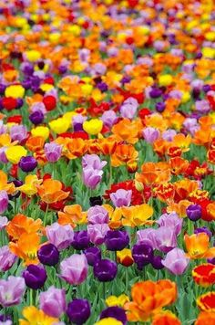 Wonderful colourful mix of Tulips:)