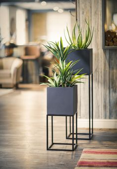 Oakley Planter Stand powder coated metal frame by : The Oakley Narrow plant and plant stand combination. Perfect for that signature piece in your home or office. A beautiful way to introduce plants. Modern Plant Stand, Diy Plant Stand, Plant Stands, Metal Plant Stand, Tall Plant Stand Indoor, House Plants Decor, Plant Decor, Mid Century Living Room, Office Plants